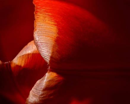 Dennis James - Tulip Pedals 1