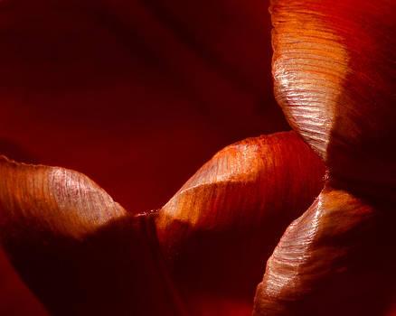 Dennis James - Tulip Pedals 3