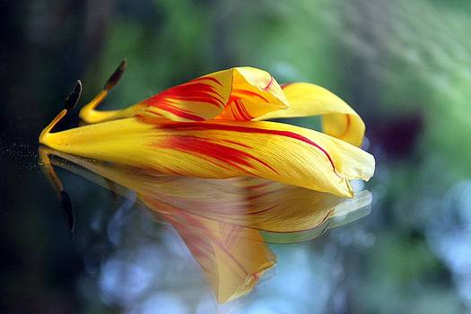 Tulip Reassembled 3 by Andrea Lazar