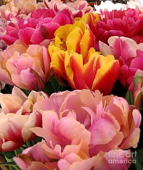 Tulip Time by Judyann Matthews