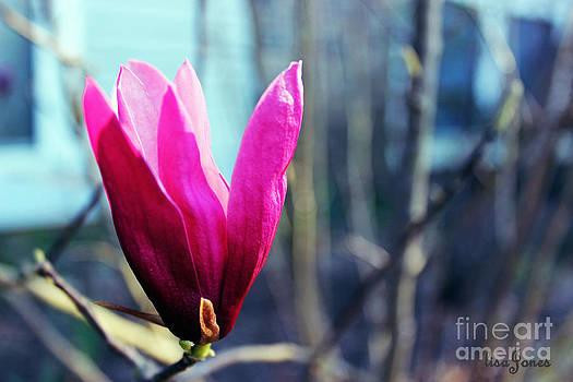 Tulip Tree by Lisa Jones