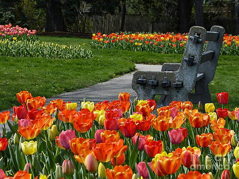 Christine Stack - Tulips and Bench in a Park