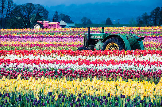 Tulips And Tractors by Brian Bonham