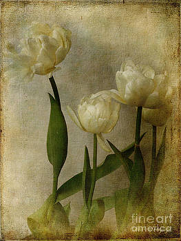 Tulips by Chris Armytage