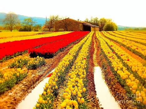Tulips field in Provence by a farm stone house France by Flow Fitzgerald