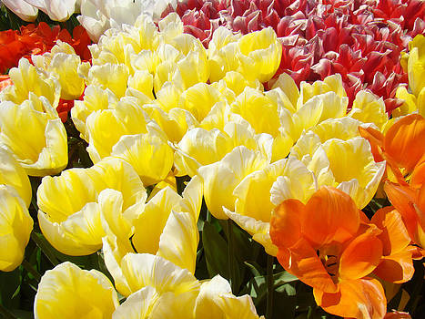 Baslee Troutman - Tulips Flowers Art Prints Yellow Tulip Floral