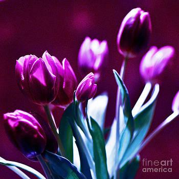 TULIPS - Fuchsia by Silva Wischeropp