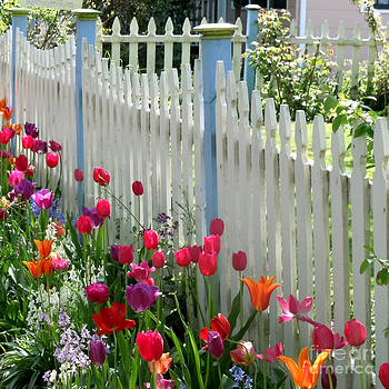 Tulips Garden Along White Picket Fence by Kristie Hubler