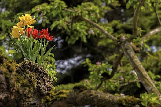 Paul W Sharpe Aka Wizard of Wonders - Tulips Growing in a Tree