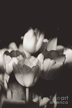 Tulips in the Light I by Chris Ann Wiggins
