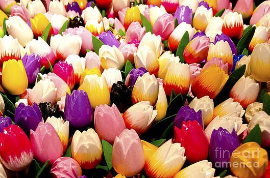 Pravine Chester - Tulips in Wood
