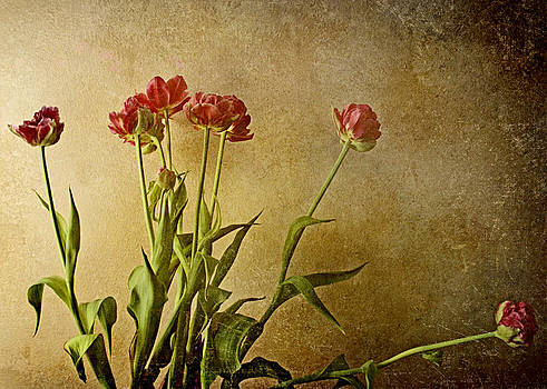 Tulips by Kelly Rockett-Safford