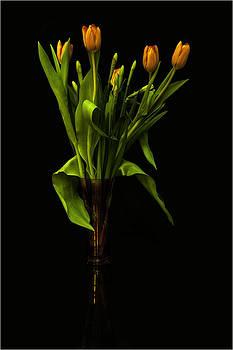 Nigel Jones - Tulips