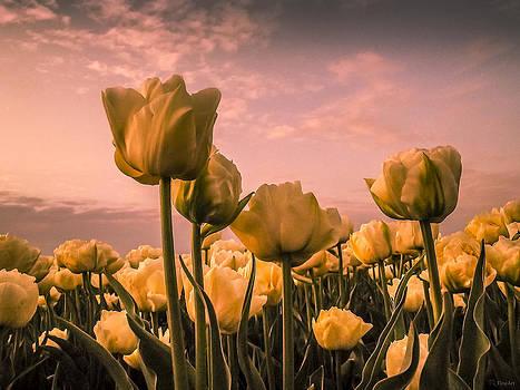 Tulips on a pink sky by Yvon van der Wijk