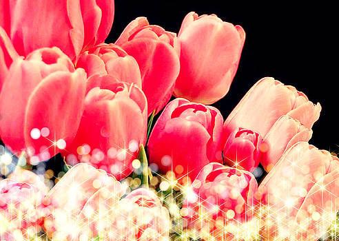 Debra  Miller - Tulips Sparkle