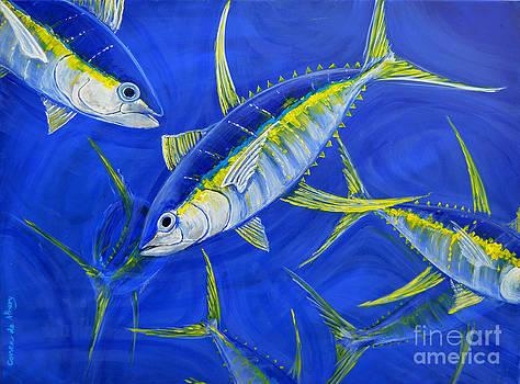 tuna school in Bahamian water by Paola Correa de Albury