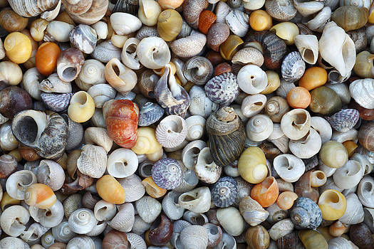 Duncan Usher - Turbinate Monodont Shells Spain