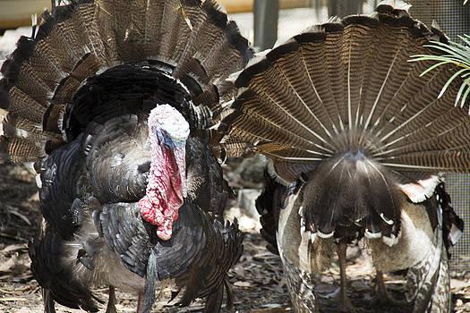 Turkey by Debbie Cundy