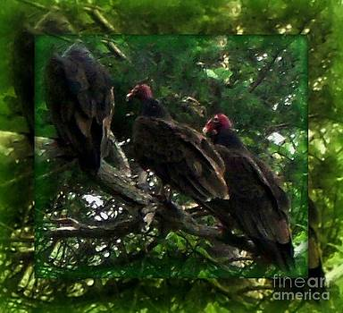 Gail Matthews - Turkey Vultures