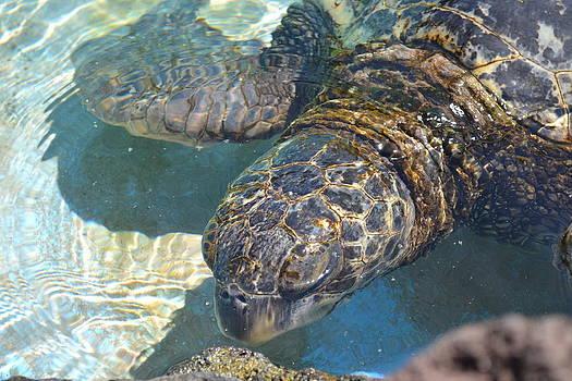 Turtle by Amanda Eberly-Kudamik