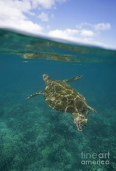 Turtle and Clouds Maui by David Olsen