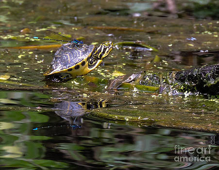 Turtle and his friend by Denise Ellis
