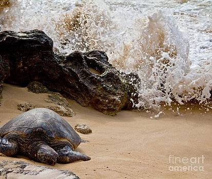 Turtle Bay by Kim Quintano