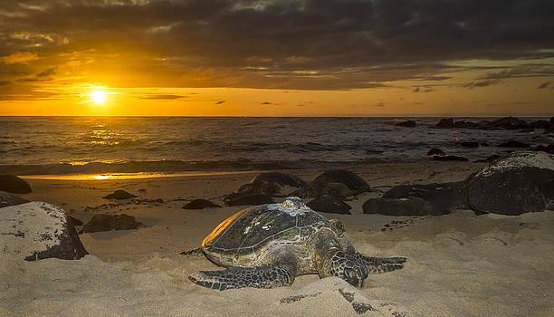 Turtle Beach sunset Oahu Hawaii by Jianghui Zhang