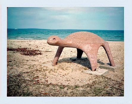 Turtle by Brady D Hebert
