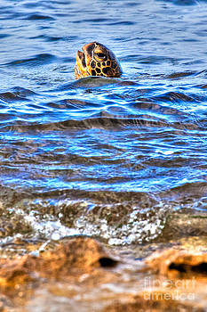 Turtle Coming Up for Air at Shipwreck Beach Lanai by Christy Woodrow