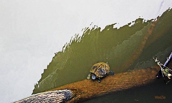 Turtle on the Log by Carolyn Ricks