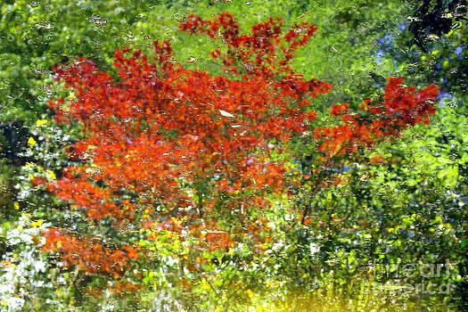 Douglas Taylor - TURTLE POND REFLECTION