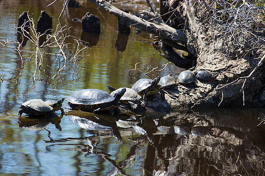 Turtle Row by Laurel Butkins