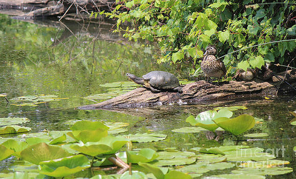 Turtle with Duck Family by Beauty Balance Design