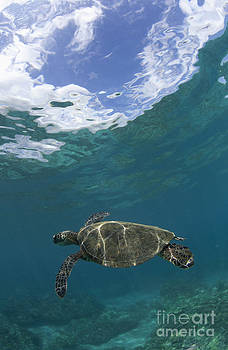 Turtle With Sky by David Olsen