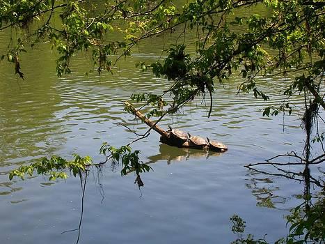 Turtles by Vennie Deas Moore