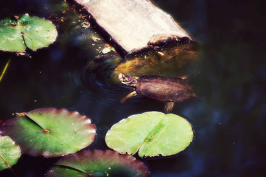 Turtling Around by Melanie Lankford Photography