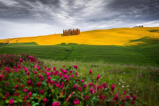 Francesco Riccardo  Iacomino - Tuscan Colors