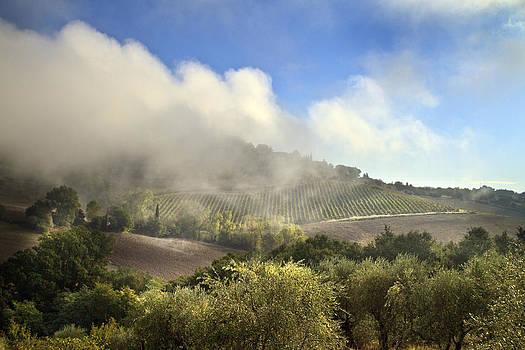 Tuscan Field in Fog by John Hix
