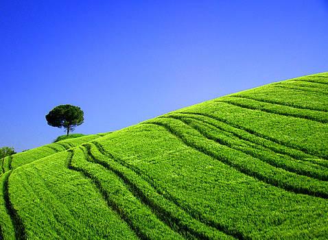 Tuscan hill by Giorgio Darrigo