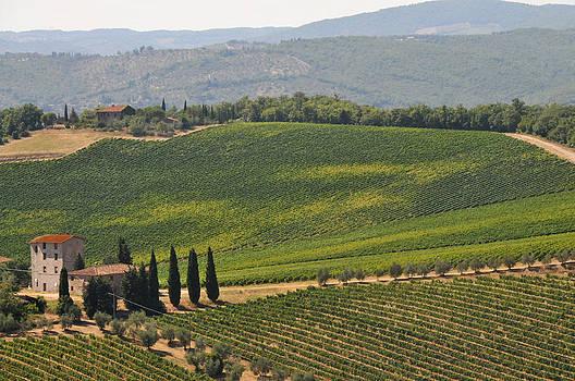 Tuscan Hillside by Susie Rieple