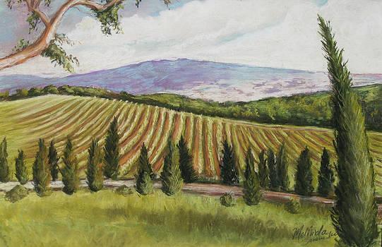 Tuscan Vineyard by Melinda Saminski