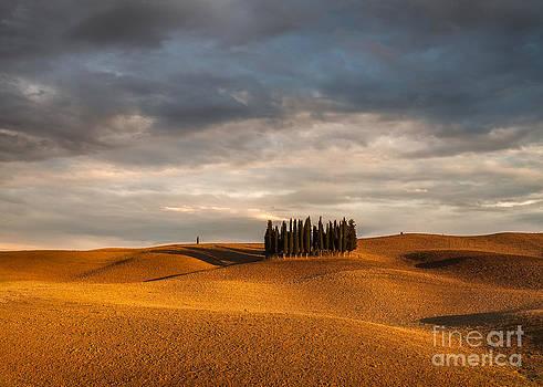 Tuscany cyprysses by Pawel Klarecki