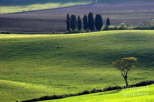 Tuscany Green hills by Arie Arik Chen