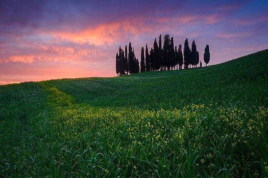 Tuscany Grove by Mike  Walker