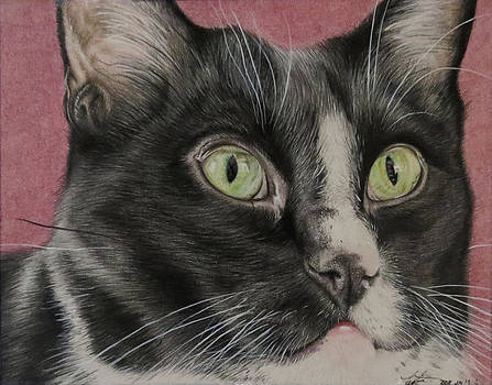 Tuxedo Cat by Tara Aguilar