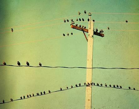 Gothicrow Images - Tweeters Tweeting