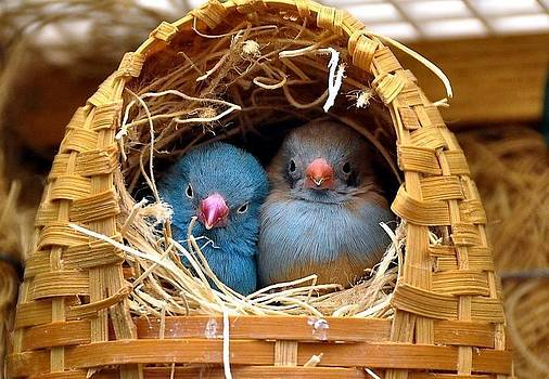 TweetTweet by Cindy Selvaggio