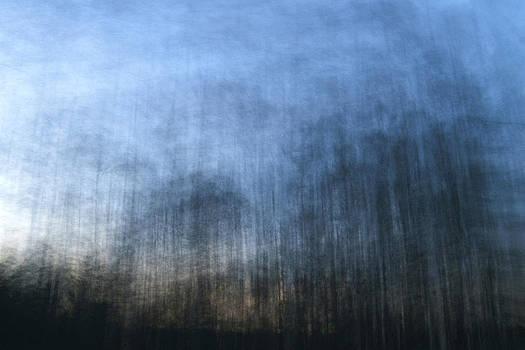 Twilight Trees by Brad Emerick