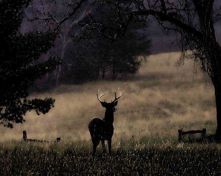 Twilight Whitetail by TnBackroadsPhotos